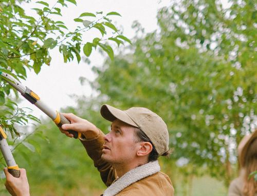 Orezávanie stromov, dobré hrable, zavlažovanie záhonov.