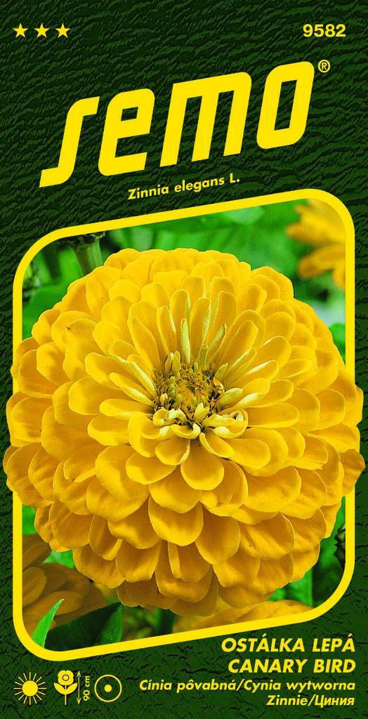 Cínia pôvabná Canary bird 0.7g